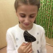 Экскурсия в краеведческий музей на выставку тропических бабочек